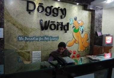 Doggy World Photo Gallery